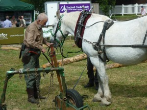 Draught horse in the woodland arena
