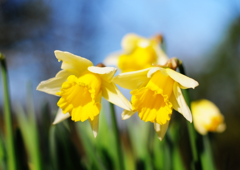 3 Ways To Celebrate St David S Day 2012 The Real Wales