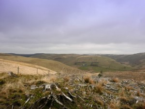 Cambrian Mountains At Bro Tregaron Walking Weekend 4 And 5 May 2013 The Real Wales