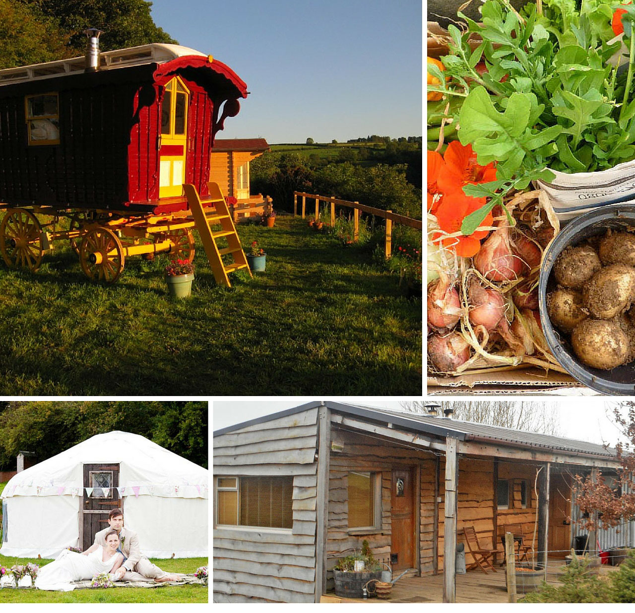 Four images in a collage, gypsy caravan, a box of vegetables, a bride and groom outside a yurt and a wood cladded shack