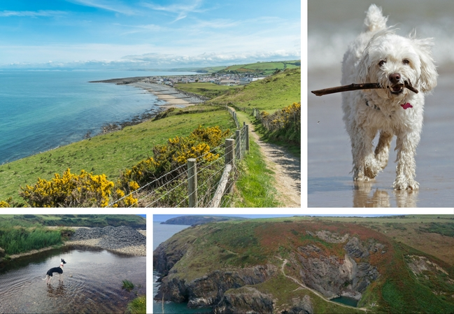 4 images, one of a black and white whippet stood near a beach, another of a fluffy white dog carrying a stick in its mouth, another of the coastline in Ceredigion and one of the witches cauldron in Pembrokeshire