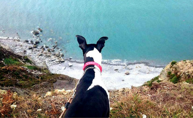 black and white whippet on cliff path
