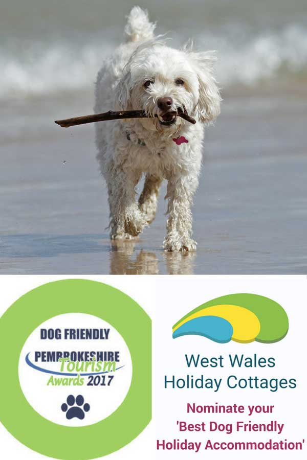 dog on a beach with stick in its mouth and company logos at the bottom