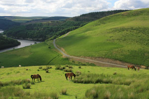 llyn brianne with ponies