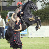 Photo of Aberaeron Festival of Welsh Ponies and Cobs.