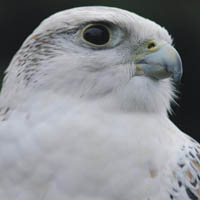 Photo of Hawksdrift Falconry