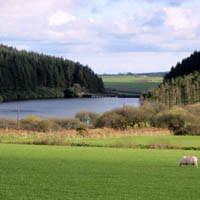Photo of Llys y Fran Country Park.