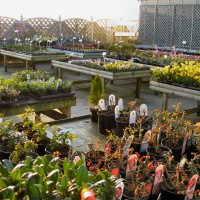 Photo of Penrallt Garden Centre and Nursery