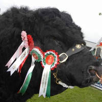 Photo of The Royal Welsh Agriculture Show
